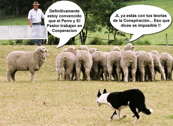 perro_y_pastor_cooperan