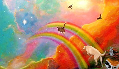 animales arcoiris