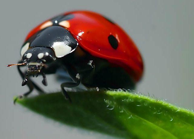 Un reciente Estudio descubre que los insectos pueden tener conciencia propia Ins-640x457